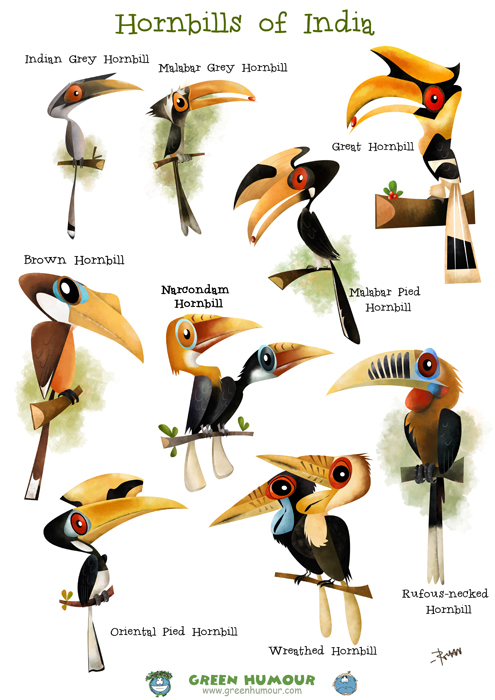 Image result for hornbill species in india