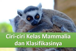 Ciri-ciri Mamalia dan Klasifikasinya