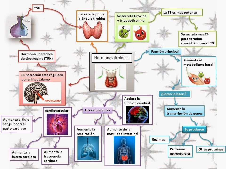 Un curso corto en alimentos acelerar metabolismo