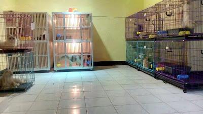 Adopsi Kucing Bandung