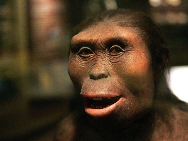 Australopithicus Afarensis
