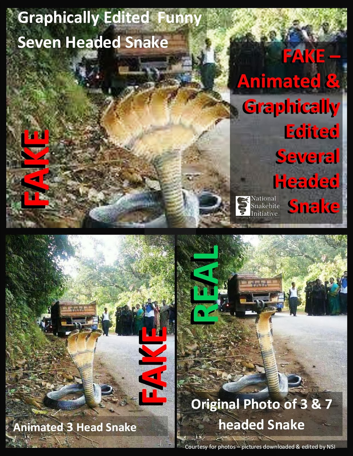 Myths on Snakes in India: Five Head Cobra - photo#29