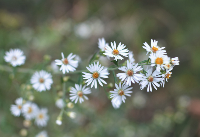 The Flying Clubhouse: Pumpkin Spice My Wardrobe #wildflowers