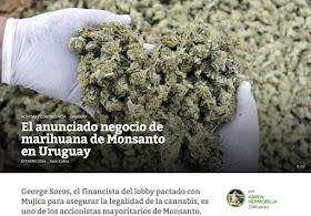 Resultado de imagen de Marihuana  Uruguay Soros