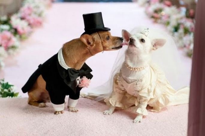All List Of Different Dogs Breeds: Wedding Dresses For Dogs