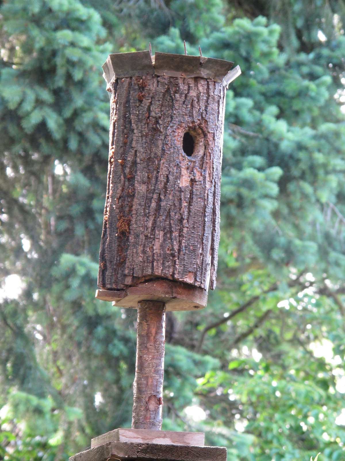 Bea That As It Mae The Nuthatches And The Log Bird House