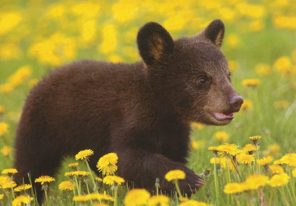 Find great deals on eBay for BABY BEAR Picture Photo. Shop with confidence.