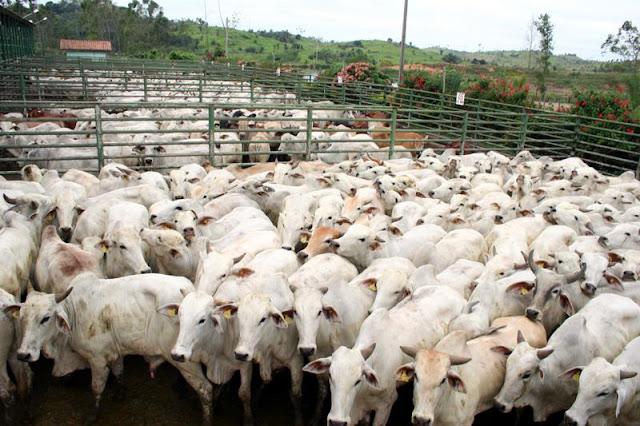 Abate de bovinos e suínos