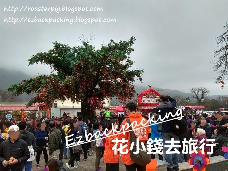 林村 許願樹