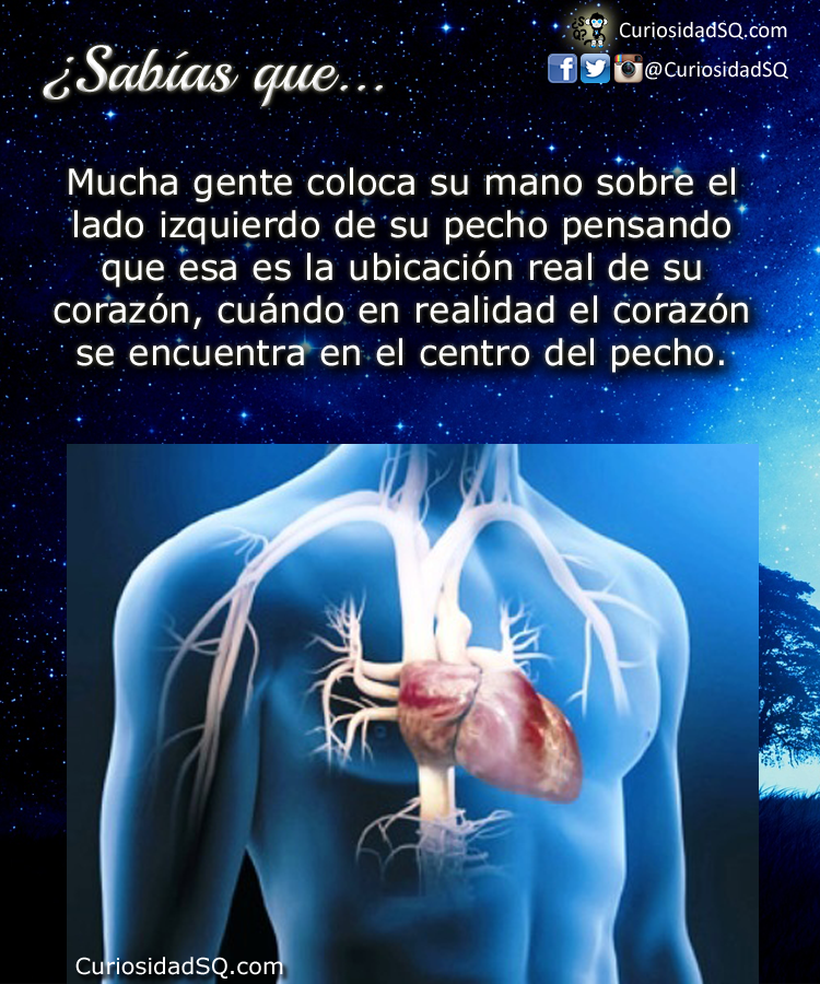 Organos que se encuentran en la parte izquierda del cuerpo humano