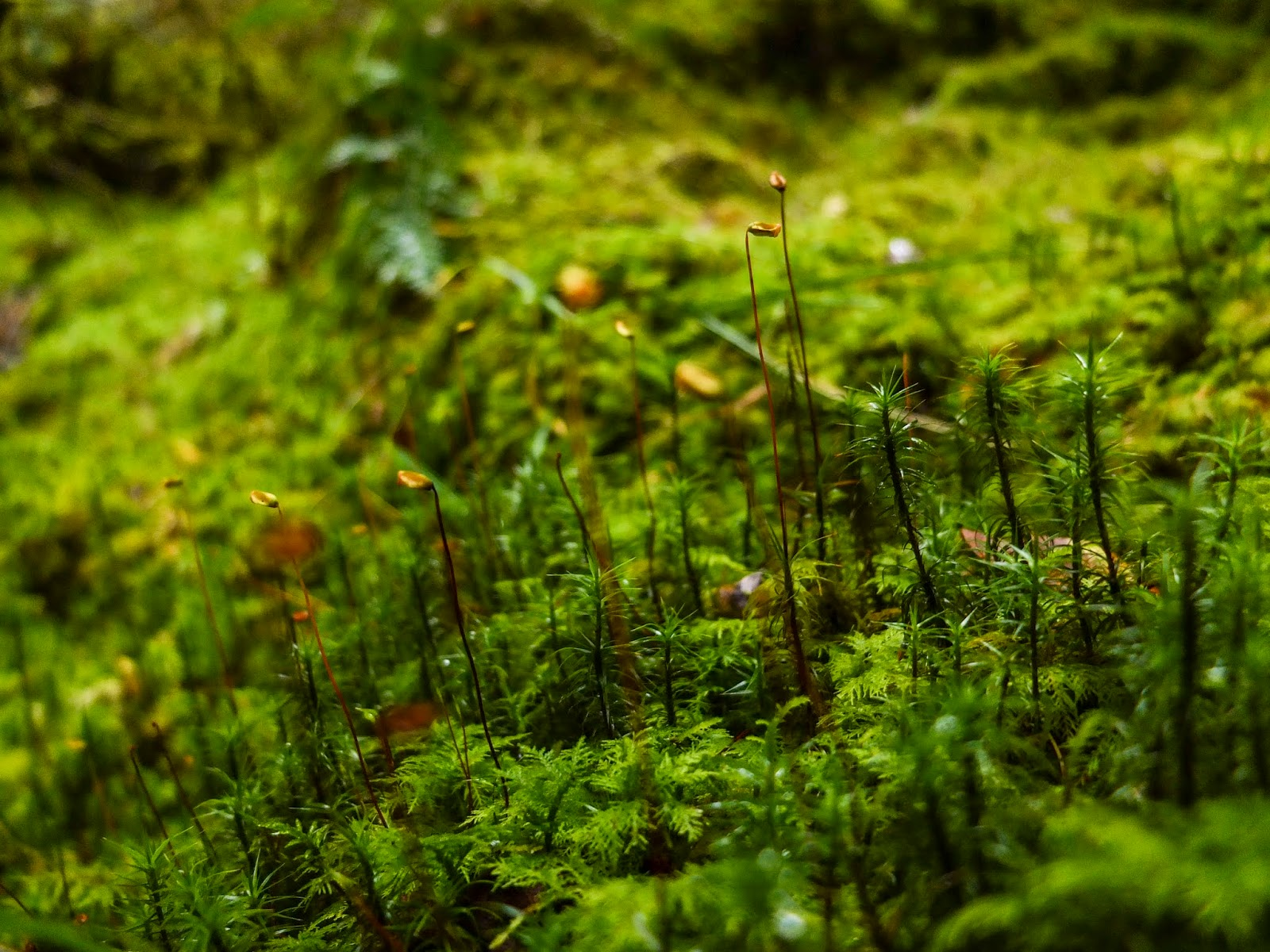 A close up of moss inside a forest.