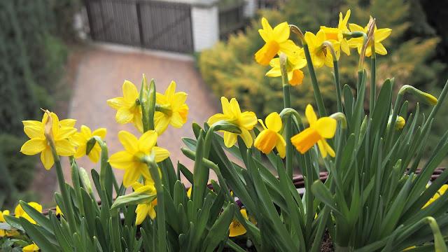 Wiosna, wiosna, ach to ty
