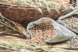 India pitches for declaring 2019 as International Year of Millets