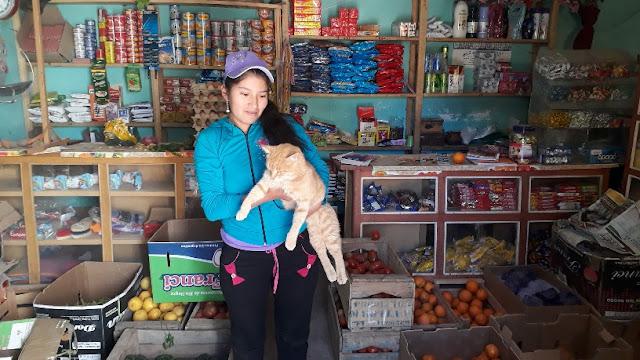 Auch Katzen fühlen sich in den Läden sehr wohl.