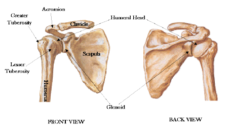 scapula shoulder blade gliding post competitive insight