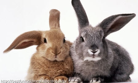 Two cute rabbits.