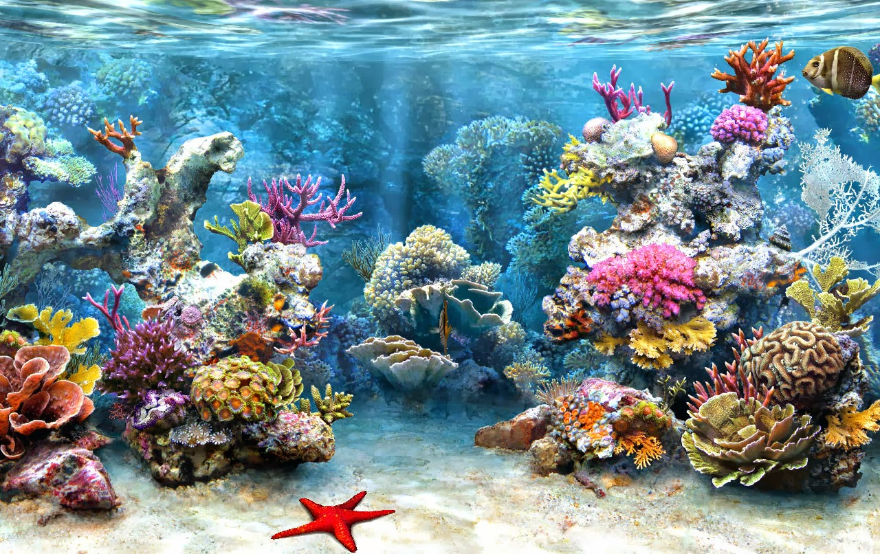 Shining Moments: A Coral Reef