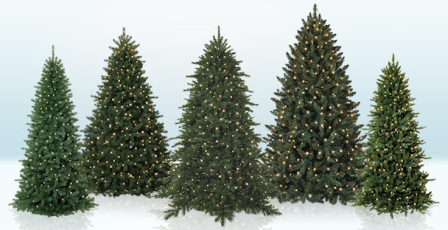different types of christmas trees - Different Christmas Trees