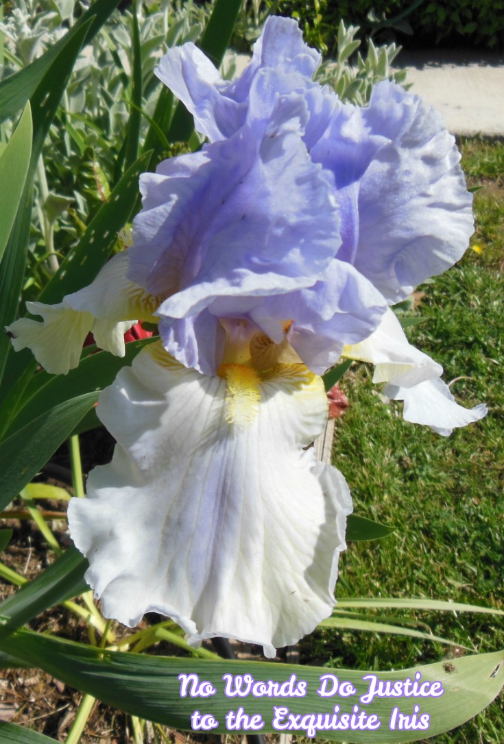No Words Do Justice to the Exquisite Iris