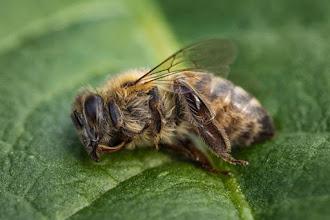 Somente nos últimos 3 meses, agrotóxicos mataram cerca de 500 milhões de abelhas no Brasil