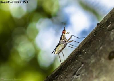 UFPR, nova espécie, Universidade Federal do Paraná, insetos, pesquisadores da UFPR descobrem novas espécies de insetos, Reserva Natural Guaricica, animais, Paraná, natureza, meio ambiente, pesquisa, ciência