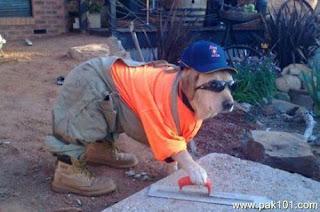 engenheiro cão rir lol email divertido