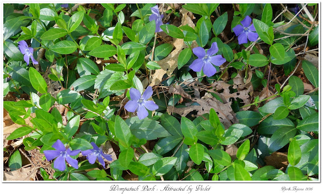 Wompatuck Park: Attracted by Violet
