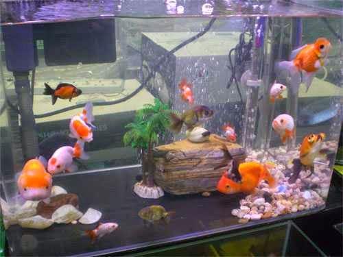 Fresh Water Aquariums A List Of Aquarium Accessory