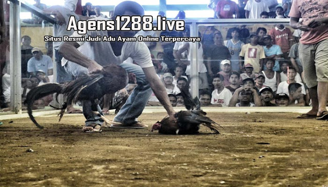 Agen Sabung Ayam S128, S1288 Live Streaming Di Indonesia