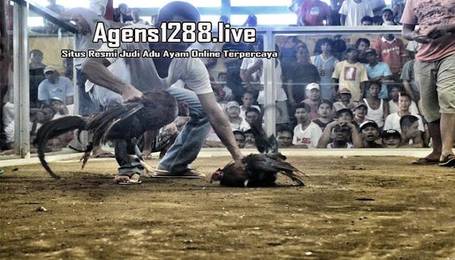 Agen Sabung Ayam S128, S1288 Live Streaming Di Indonesia