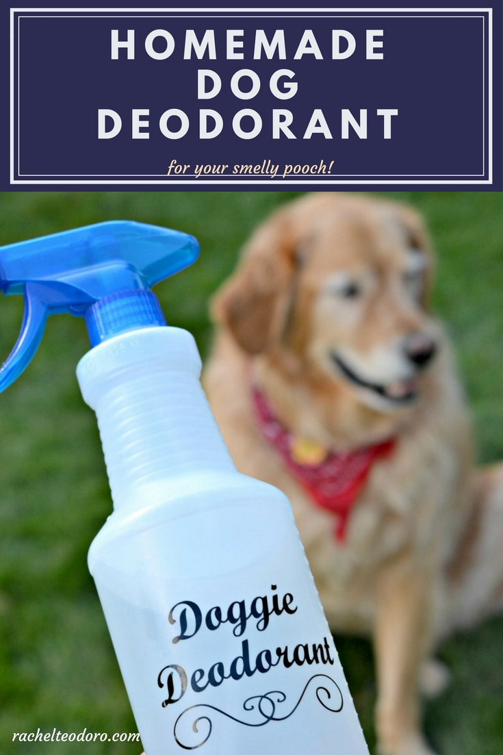 Can You Make Homemade Dog Deodorant