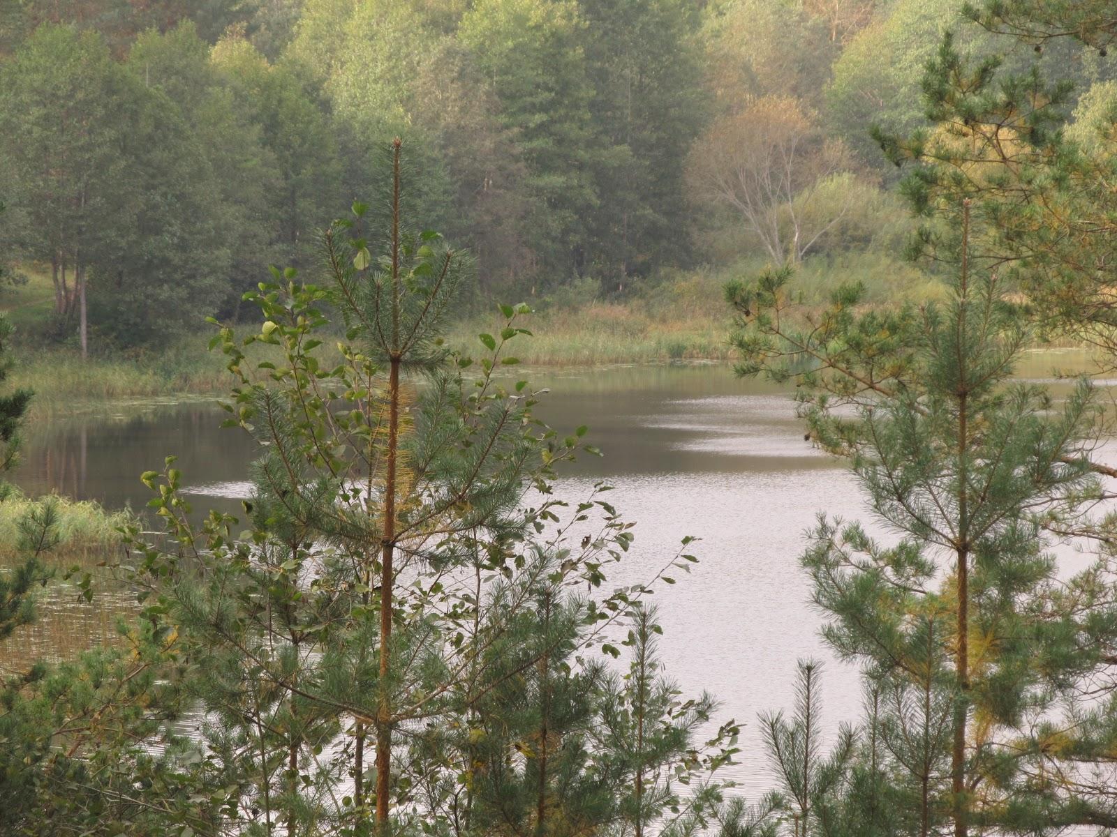 Люсинец вид с леса