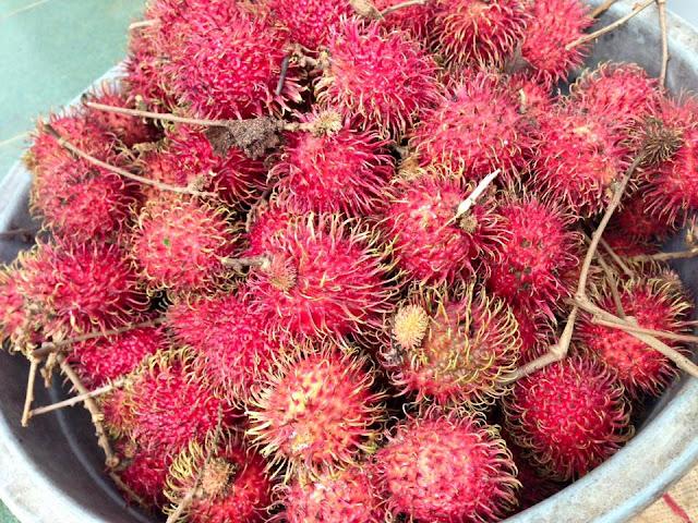buah rambutan hasil memetik langsung di kebun.