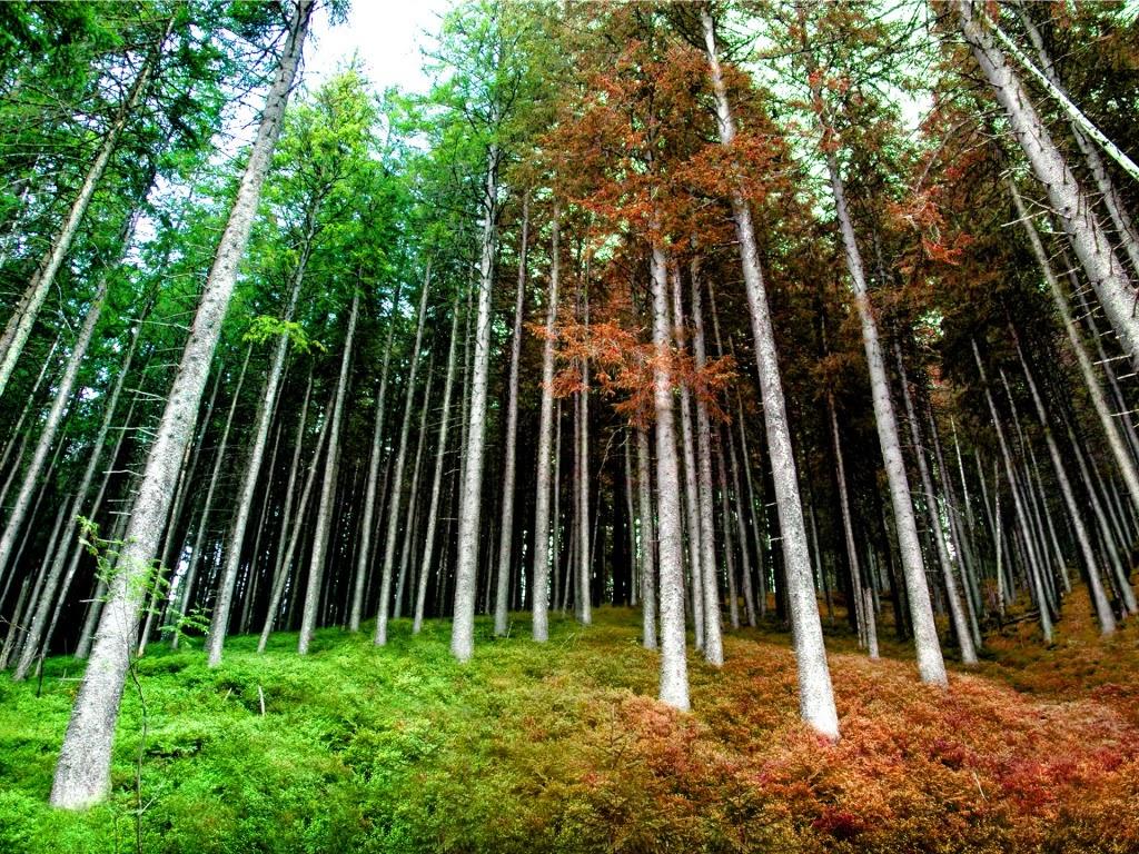 Pozadine Za Desktop Priroda Ranojesenska šuma