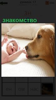На постели лежит ребенок и протянул руки к рядом стоящей собаке, знакомство происходит