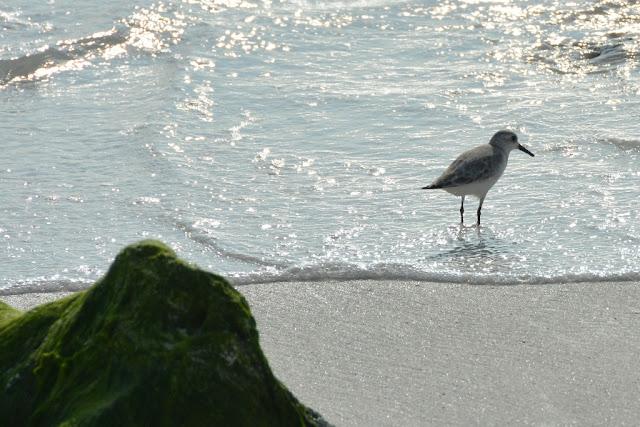 Gardner Bay Galapagos bird