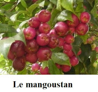 contient une grande majorité des vitamines et des minéraux.