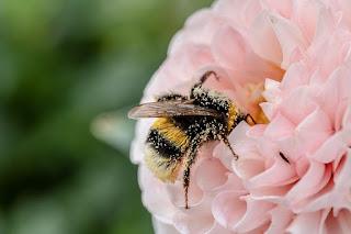 أغرب واذكي 10 حشرات في العالم الجزء الثاني .
