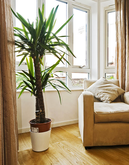 The Best Shade Plants to Decorate 4