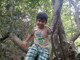 Ishaan on cashew tree