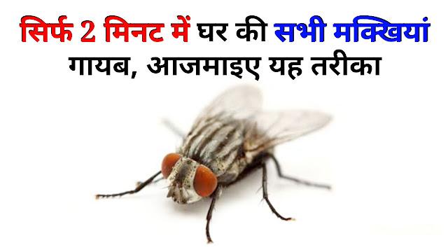 सिर्फ 2 मिनट में घर की सभी मक्खियां गायब, आजमाइए यह तरीका