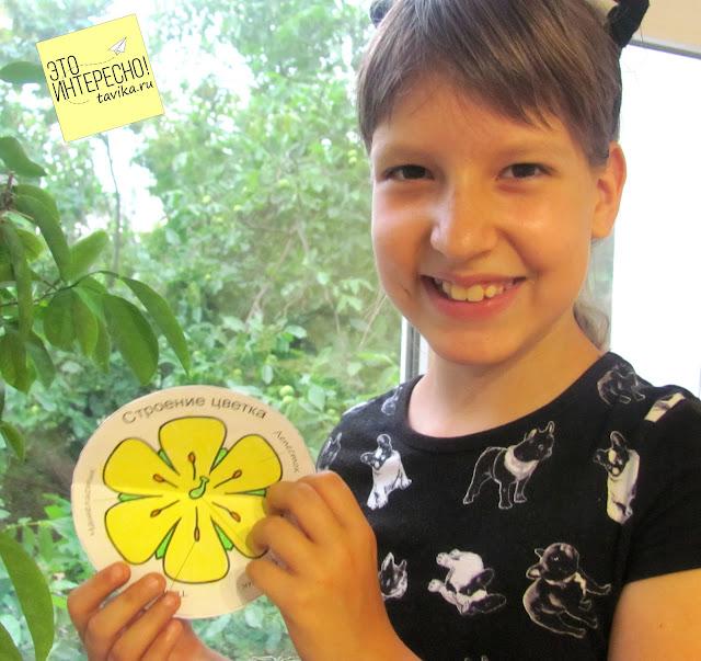 Части цветка для детей