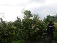 Hujan Disertai Angin Kencang Kembali Robohkan Beberpa Pohon Di Sleman
