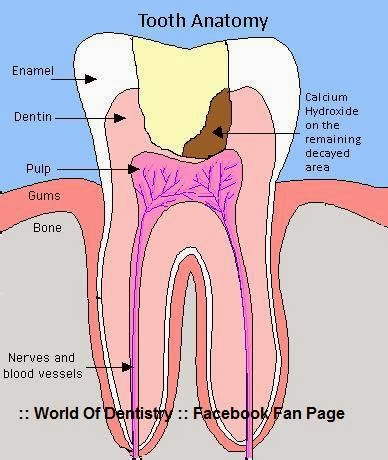 World Of Dentistry  Pulp Capping (Direct and Indirect)