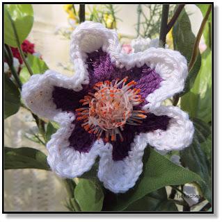 weiß-lila Blüten
