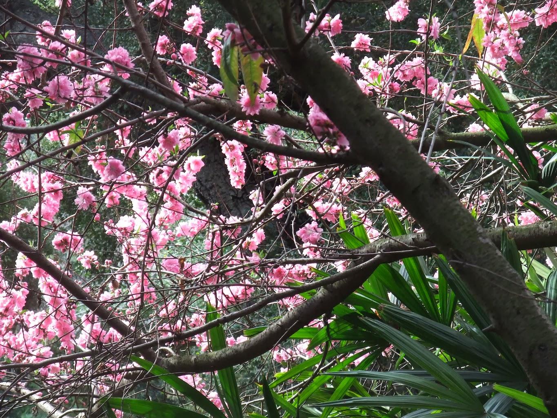 Plum Tree Chinese Restaurant Overland Park