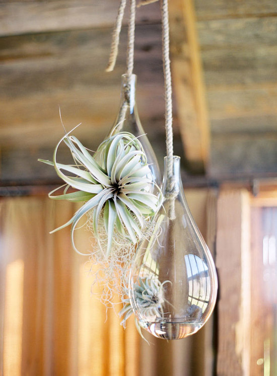 Country style succulent decor