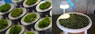 Teknologi yang terinspirasi dari struktur jaringan tumbuhan - biophotovoltaic
