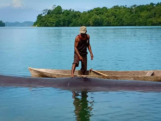 Ikan Paus Terdampar di Pantai Siboru, Distrik Wartutin Fakfak