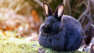 New Cute Rabbit HD beautiful wallpapers Photos Free for Desktop
